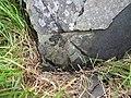 Damaged bench mark alongside Long Lane - geograph.org.uk - 1453657.jpg