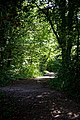 Dappled shade footpath at Woods Mill, Sussex Wildlife Trust, England.jpg