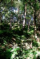 Dappled shade in Smeekley Wood - geograph.org.uk - 552184.jpg