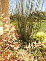 Darioush Winery, Napa Valley, California, USA (8376258809).jpg
