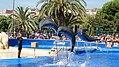 Delphinarium Marineland Catalogne.jpg