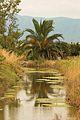 Delte Ebre zona-laBanya 0551-01.jpg