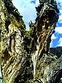 Denzlingen Baum - panoramio (1).jpg