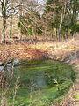 Dewpond, Friston Forest - geograph.org.uk - 132039.jpg