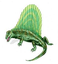 Restoration of Dimetrodon