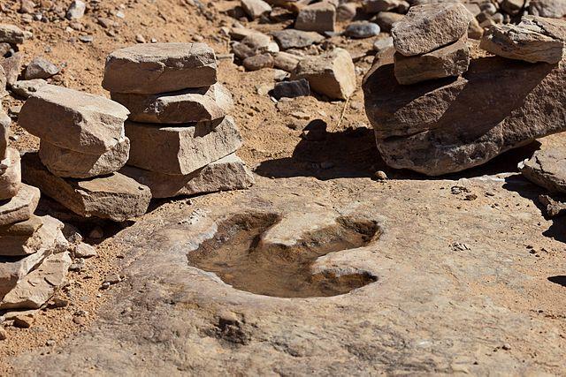 Fossiliserat spår av en dinosaurie, Utah, USA.