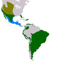 Distribuição Buraqueira