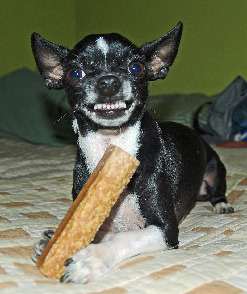 Do not take his bone