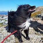 Dog on windy Wellington hill track.jpg
