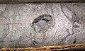 Dolostone (Knox Dolomite, Upper Cambrian; Warren County core, Ohio, USA) 7.jpg