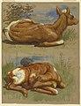 Drawing, Three Studies of Calves, Stockbridge, July 7, 1876 (CH 18368963).jpg