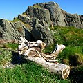 Driftwood, Ballymacormick Point - geograph.org.uk - 807083.jpg