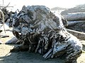 Driftwood art (48832887318).jpg