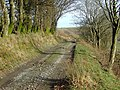 Drover's Road in Cwm Doethie, Ceredigion - geograph.org.uk - 1229945.jpg