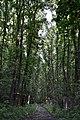 Dvorčiansky les - panoramio (1).jpg