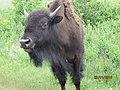 East Custer, SD, USA - panoramio (42).jpg