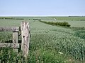 East Field, Burton Agnes - geograph.org.uk - 464185.jpg