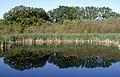 Eastrington Ponds Nature Reserve - geograph.org.uk - 592962.jpg