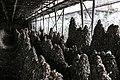 Egg industry 12.jpg