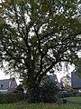 Eiche Naturdenkmal I.A.3 3.jpg