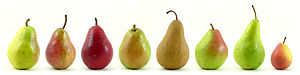 Pyrus communis - Eight varieties of pears, from left to right, Williams' Bon Chrétien (sold in the US as Bartlett), two Red Bartlett varieties, d'Anjou, Bosc, Comice, Concorde, and Seckel