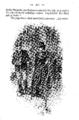 Elisabeth Werner, Vineta (1877), page - 0167.png