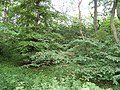 Elm wood, Trabrown - geograph.org.uk - 450852.jpg