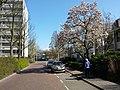 Elsrijk, 1181 Amstelveen, Netherlands - panoramio (39).jpg