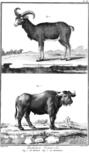 Encyclopedie volume 5-027.png