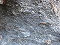 Enquin-les-Mines - Terril n° 245, Fléchinelle Est (23).JPG