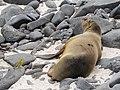 Espanola - Hood - Galapagos Islands - Ecuador (4870949681).jpg