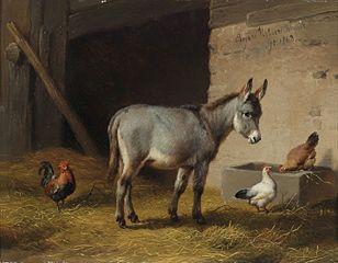 Message de l'âne dans ANE