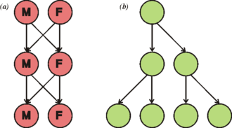 Reproduction - Illustration of the twofold cost of sexual reproduction. If each organism were to contribute to the same number of offspring (two), (a) the population remains the same size each generation, where the (b) asexual population doubles in size each generation.