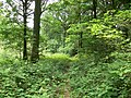 Eymore Wood near Trimpley Reservoir - geograph.org.uk - 849046.jpg