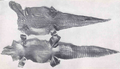 FMIB 33999 Alligator Skins edited.png