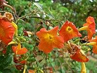 Fale - Giardini Botanici Hanbury in Ventimiglia - 448