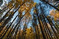 Fall Colors - Zippel Bay State Park (37533847736).jpg