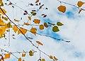 Fall leaves (42883017380).jpg