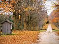Fallen Leaves October 2011.jpg