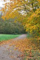 Farm road in autumn - geograph.org.uk - 604399.jpg