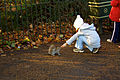 Feeding the squirrels in Hyde Park (5275856420).jpg
