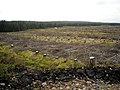Felled Section of Whitelee Forest - geograph.org.uk - 1546189.jpg