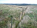 Fence and grass moorland on Thorny Knowe - geograph.org.uk - 613888.jpg
