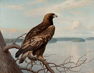 Golden Eagle by a Lake