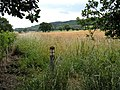 Field and paths - geograph.org.uk - 885287.jpg