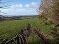 Field near Rushlade Common - geograph.org.uk - 1228781.jpg