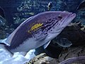 Fish fish fish.jpg