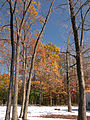 Flickr - Nicholas T - Around the Park (1).jpg