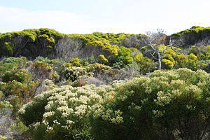 Cape Floristic Region - Image: Flora at Cape Peninsula