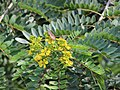 Flora from Savandurga IMG 9496.jpg